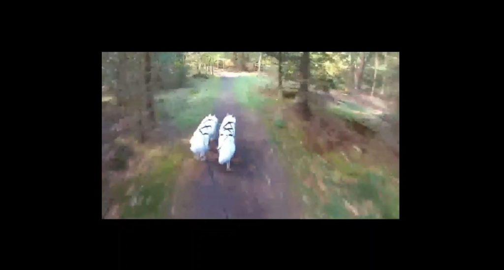 Trappenkamp Rennen 2018